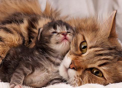 Katze mit Kitten