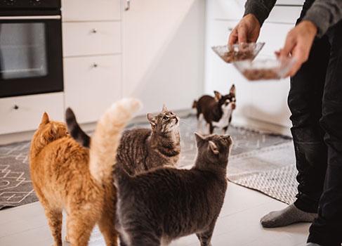 Mehrere Katzen werden gefüttert