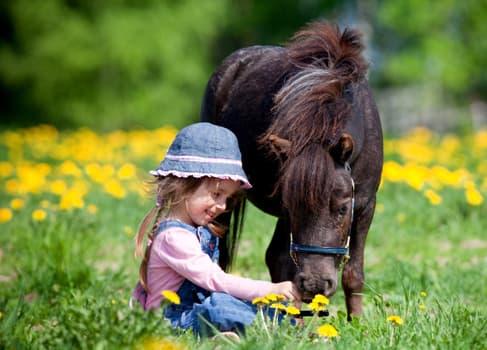 Kleines Mädchen streichelt ein Pony