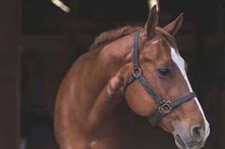Pferd steht im Stall