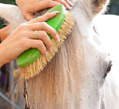 Pferdemähne