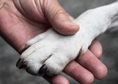 Eine Menschenhand und eine Hundpfote