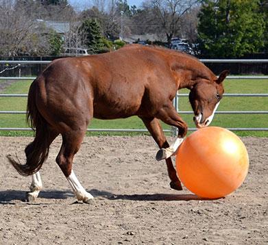 Spielendes Pferd mit dem Ball