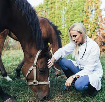 Untersuchung des Pferdes