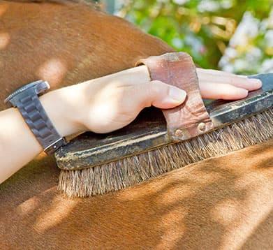 Das Pferd wird geputzt