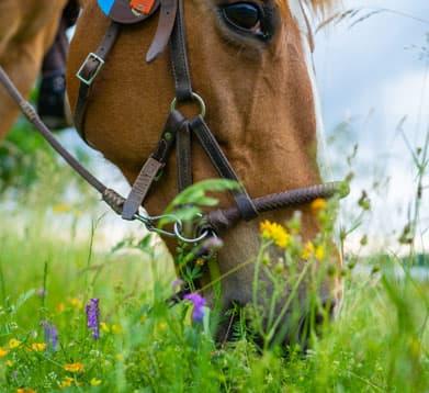 Pferd frisst