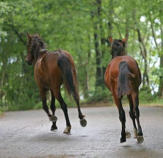 Herrenlose Pferde auf der Straße