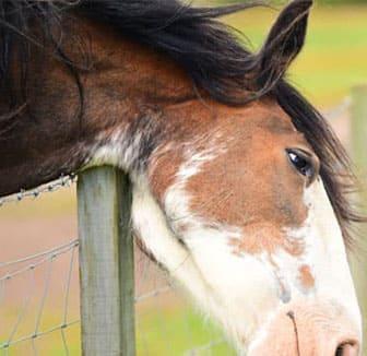 Pferd reibt sich am Zaun
