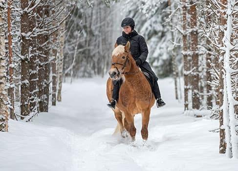 Mit dem Pferd durch den Schnee