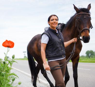 Pferd im Straßenverkehr