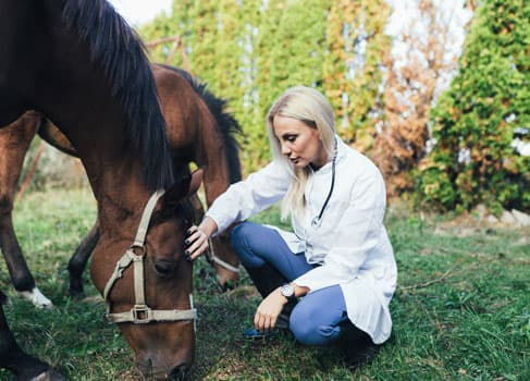 Pferd und Tierätztin