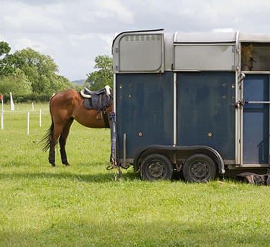 Pferd soll in den Anhänger