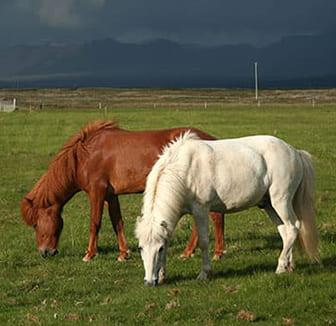Pferd bei Gewitter