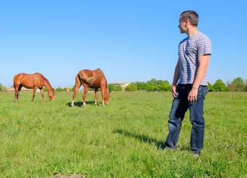 Mann und Pferde auf einer Wiese