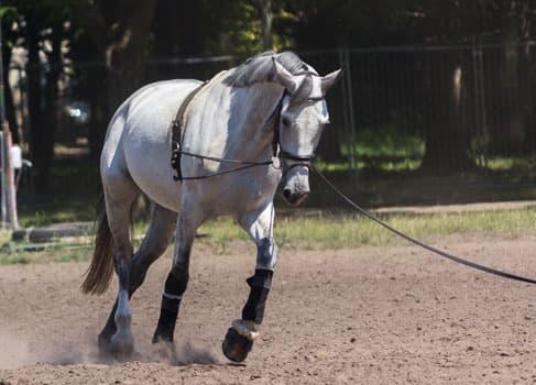 Pferd am Zügel