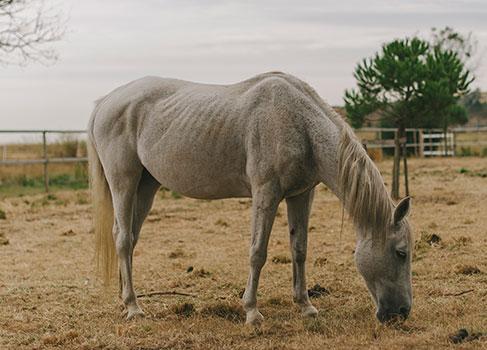 Pferdesenior auf der Weide