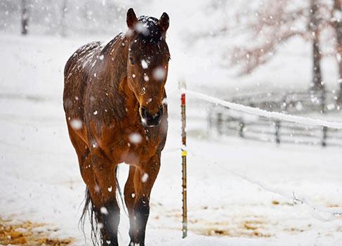 Pferdesenior im Winter