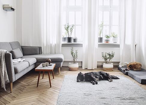 Hund auf dem Teppich