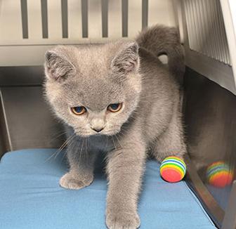 Kleines Kätzchen in der Transportbox