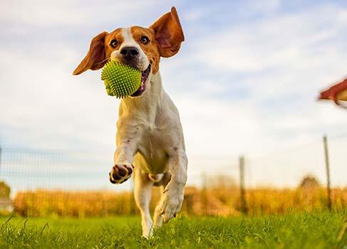 Hund beim Spielen mit einem Ball
