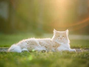 Katze liegt in der prallen Sonne
