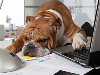 Hund liegt schlafend auf dem Schreibtisch