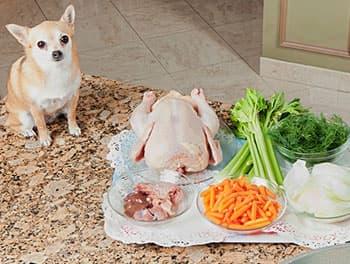 Hund bekommt rohes Fleisch und Gemüse