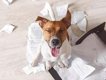 Hund zerfetzt Arbeitsunterlagen