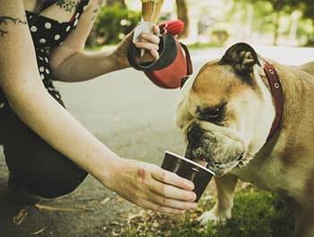 Hund wird mit Eis gefüttert