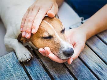 Erste Hilfe wird beim Hund durchgeführt