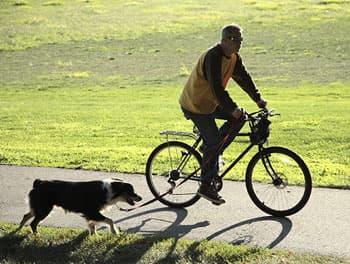 Fahrradfahrer mit Hund an der Leine