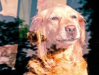 Hund sitzt im Sommer im geschlossenen Auto