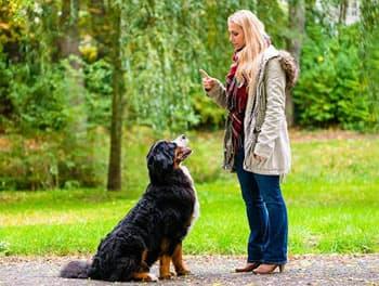 Junge Frau erzieht ihren Hund