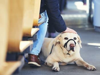 Hund im Bus