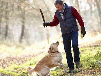 Stöckchenspielen mit dem Hund