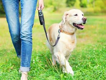 Hund geht an der Leine spazieren