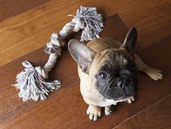 Hund sitzt vor seinem Spielzeug