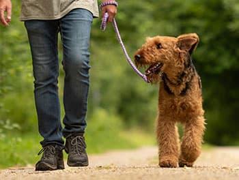 Hund an der Leine auf dem Feldweg
