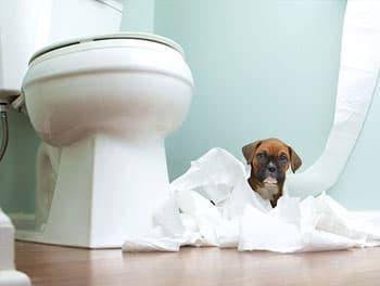 Welpe macht Unsinn auf der Toilette