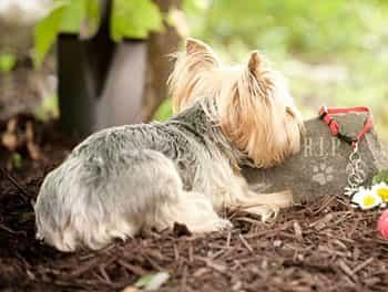 Hund liegt vor dem Grabstein