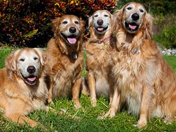Hunde sitzen brav auf der Wiese