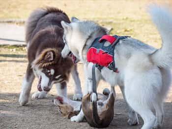 Ein Hund wird gemobbt