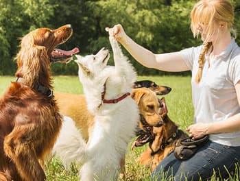 Hundesitterin kümmert sich um mehrere Hunde