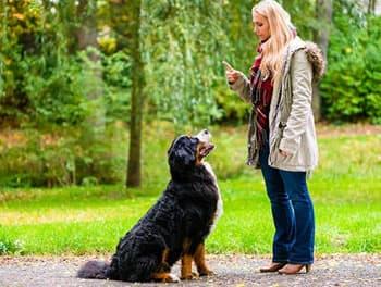 Frau erzieht ihren Hund