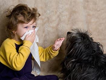 Kind leidet unter einer Hundehaarallergie