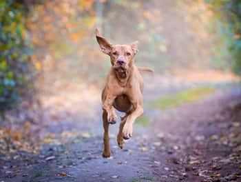 Freilaufender Hund auf dem Waldweg
