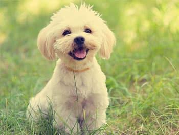 kleiner Hund sitzt auf der Wiese