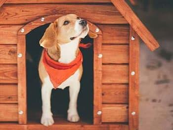 Hund sitzt in seiner Hundehütte