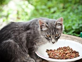 Katze sitzt vor dem Futternapf