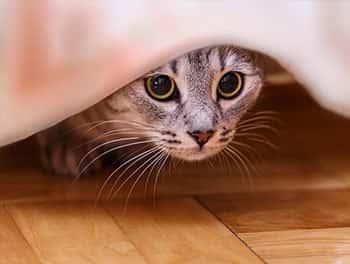 Ängstliche Katze versteckt sich
